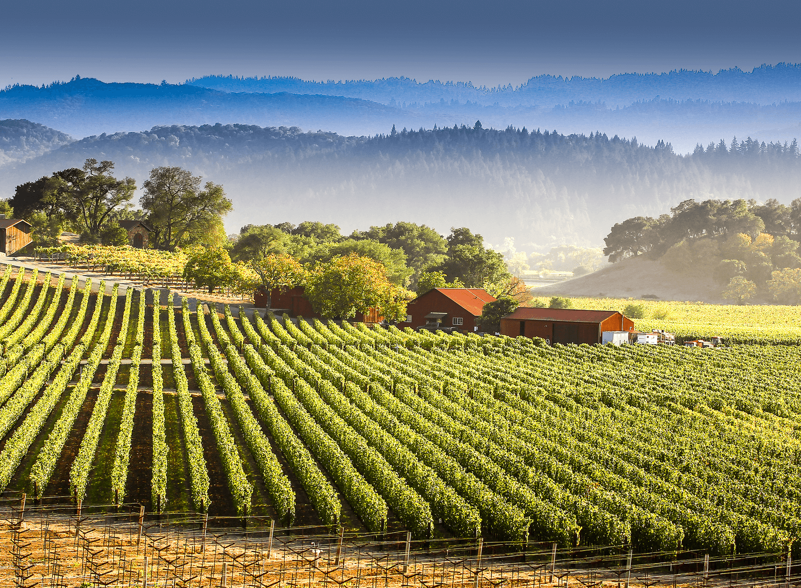 C3 MARKETING | NAPA VALLEY